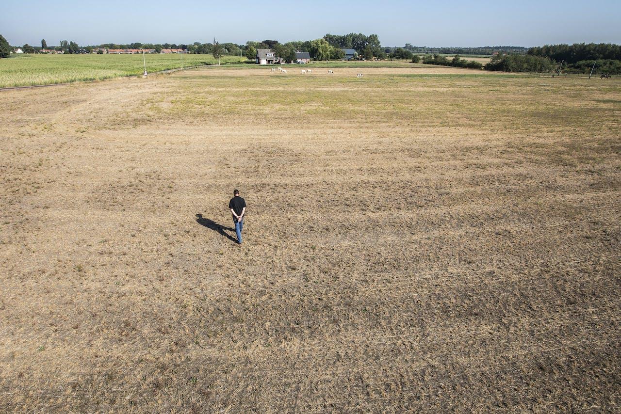 Verdroogd grasland bij het Achterhoekse Gaanderen.