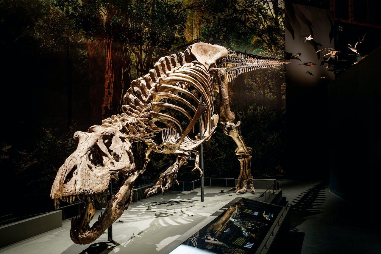 T. rex Trix