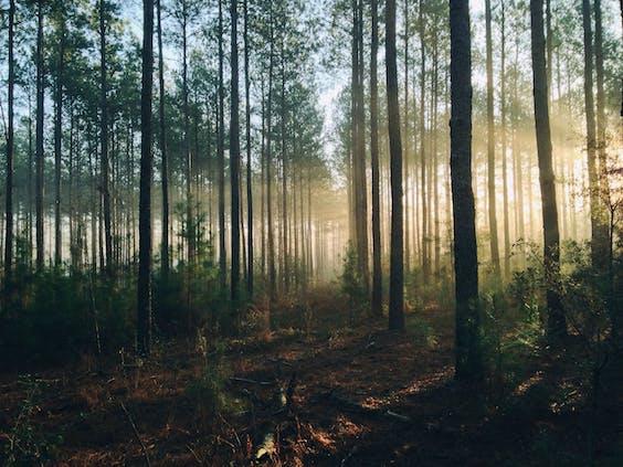 Frans Timmermans dat er massaal bossen worden bij geplant in Europa
