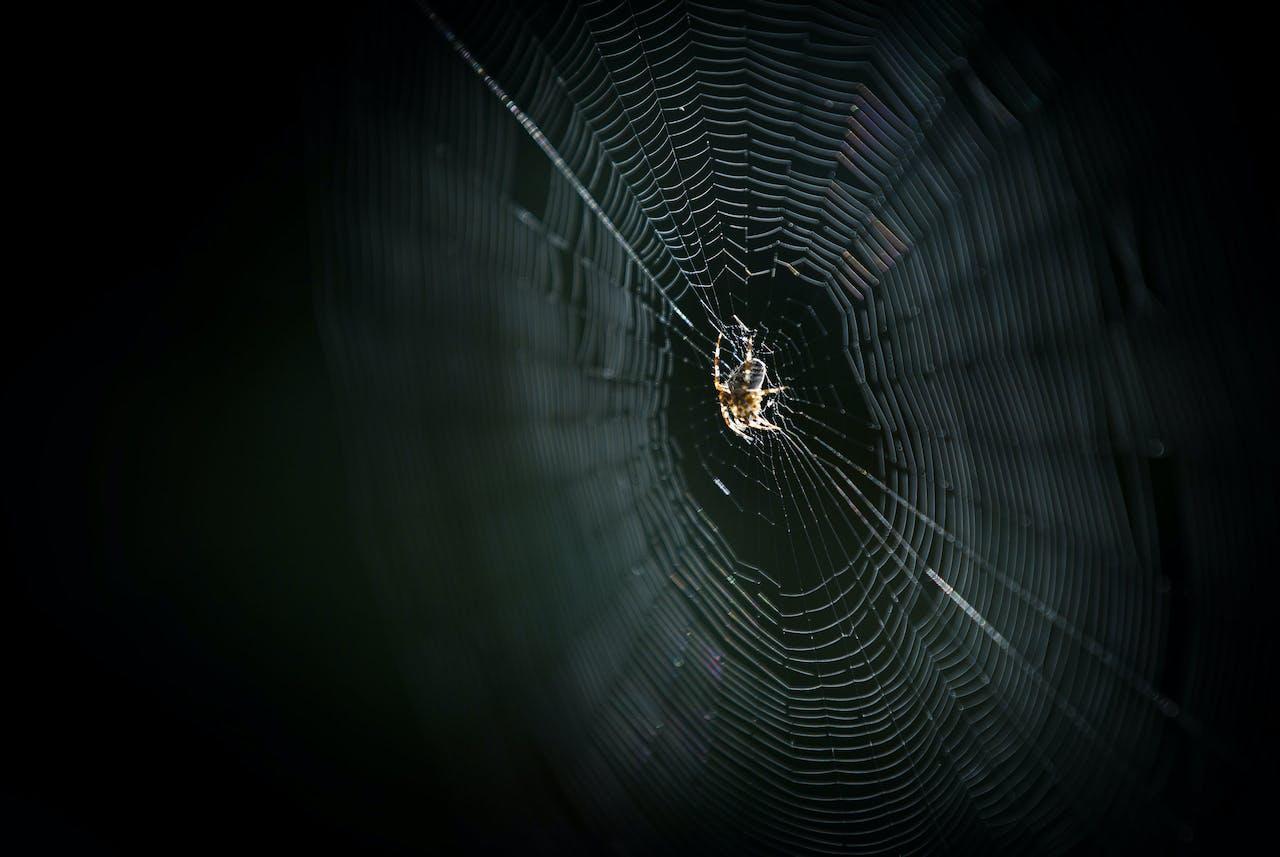 2014-09-19 15:55:20 DEN HAAG - Mensen met spinnenangst hebben het deze weken moeilijk. Door het grote aantal spinnen dat nu in Nederland wordt waargenomen regent het aanmeldingen bij centra die angststoornissen behandelen. ANP BART MAAT