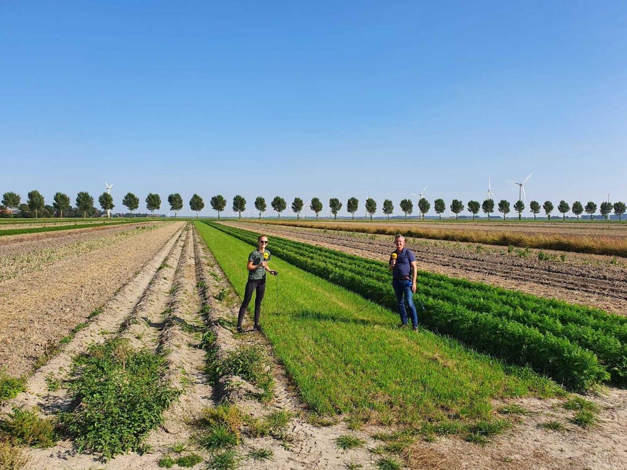 De akker van de boerderij van de toekomst: strokenlandbouw