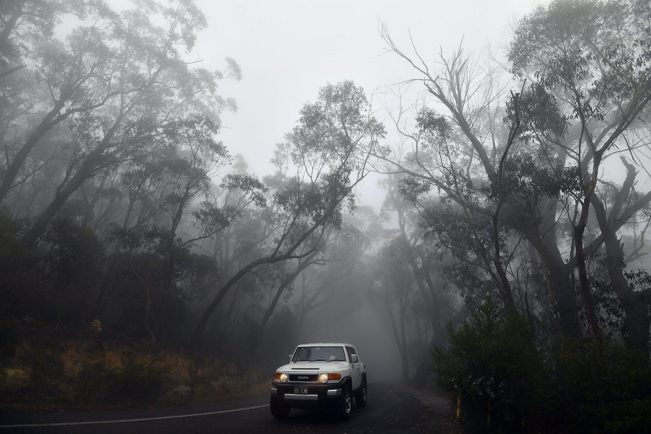 De bosbranden in Australië hebben al vele duizenden vierkante kilometers bos vernietigd.