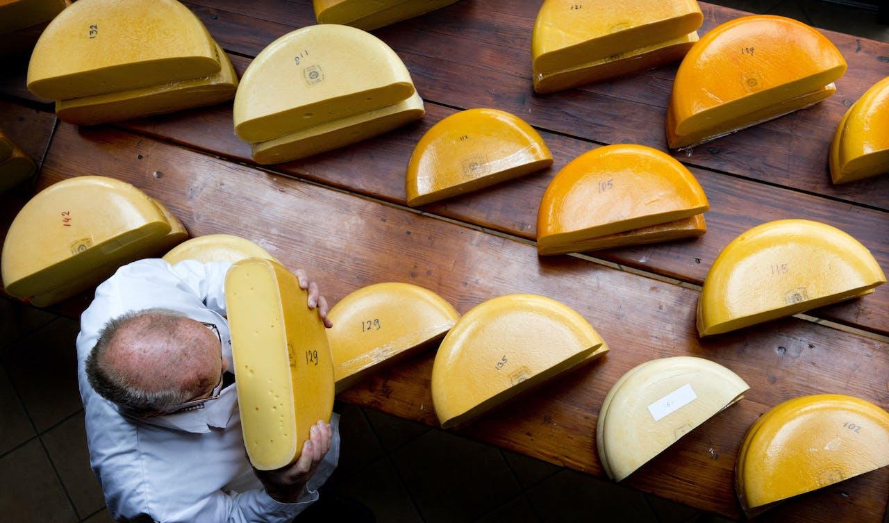 Een professionele kaaskeurmeester keurt kaas tijdens de verkiezing van de lekkerste boerenkaas op een recreatieboerderij.